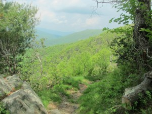 The AT in Shenandoah National Park in mid-May.